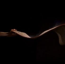 Fotograma del vídeo, cortesía ComfilmsCompany